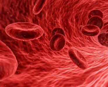 Células sanguineas