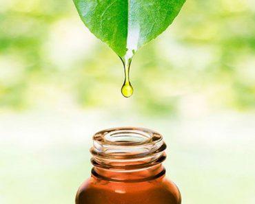 beneficios del árbol de té