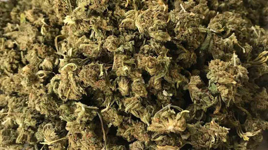 cogollos de cannabis