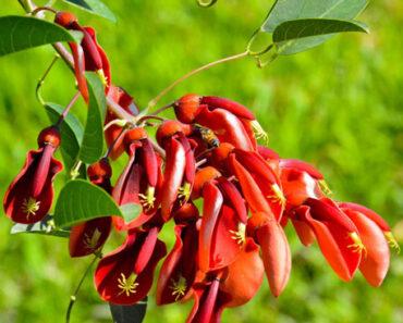 Flores nativas de argentina