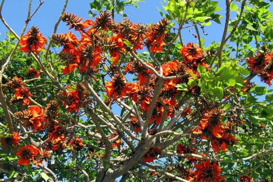 Plantas tipicas de argentina