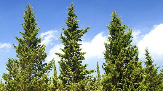 Tipos de plantas en argentina